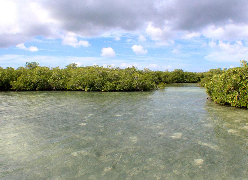 manglares-capitan-gringo
