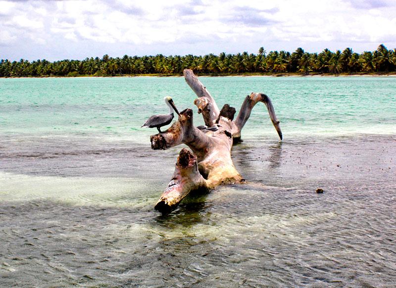 manglares-fauna-natural-capitan-gringo