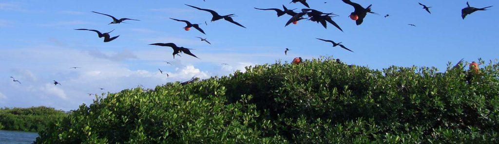 manglares-isla-saona